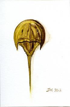 Horseshoe Crab 1 by Jennifer  Creech