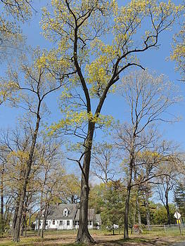 Anastasia Konn - House and a Tree