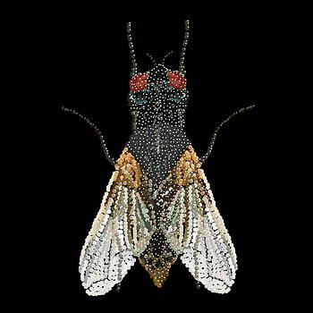 House Fly Bedazzled by R  Allen Swezey