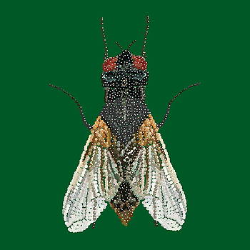 House Fly in Green by R  Allen Swezey