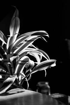 Houseplant by Jesska Hoff