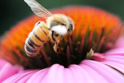 Hovering Bee by Jillian Gomez