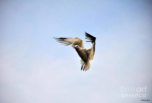Hovering Gull by Skye Ryan-Evans