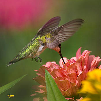 Hovering Hummer by Don Anderson