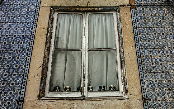How much are those doggies in the window by Georgina Noronha