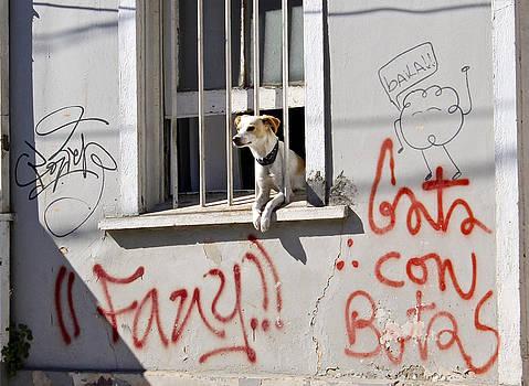 Kurt Van Wagner - How much is that Doggie in the Window?
