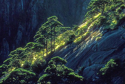 Dennis Cox - Huangshan pines