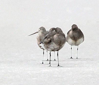 Hudsonian Godwits by Bob Richter