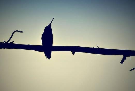 Marysue Ryan - Humingbird at Sunset