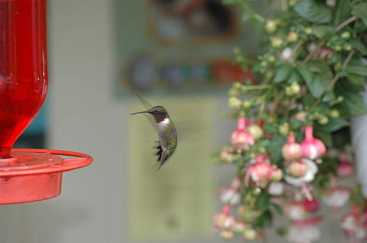 Hummer by David Armstrong