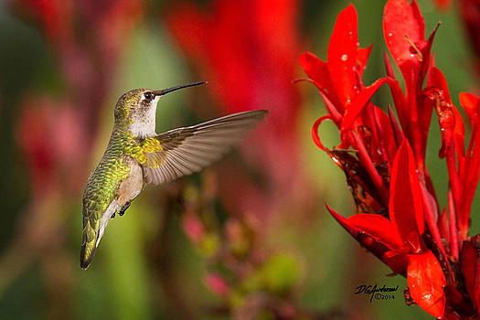 Hummer Summer by Don Anderson