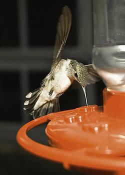 Humming bird snack by Hans Castleberg