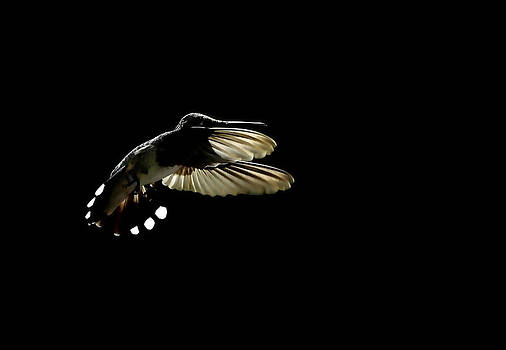 Humming Bird by Stuart Harrison