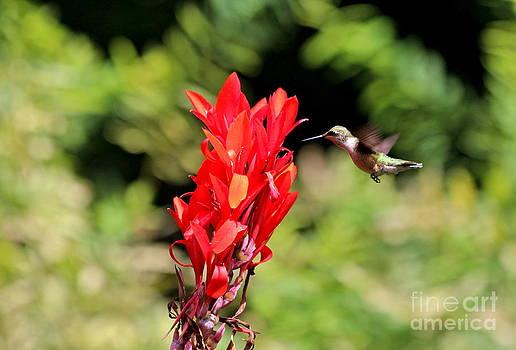 Hummingbird 1 by Jay Nodianos