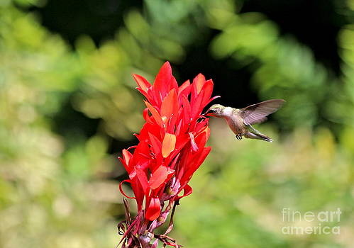 Hummingbird 2 by Jay Nodianos