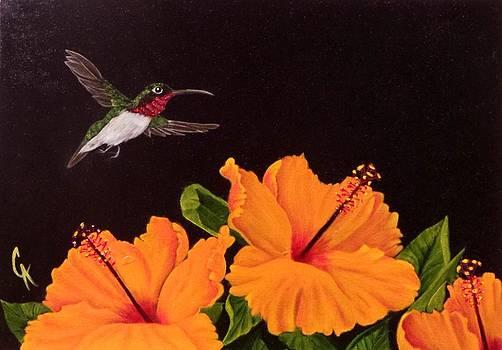 Hummingbird an Hibiscus by Carol Avants