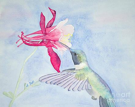Hummingbird and Columbine by Laurel Best