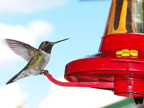 Hummingbird and Feeder by Cherie Haines