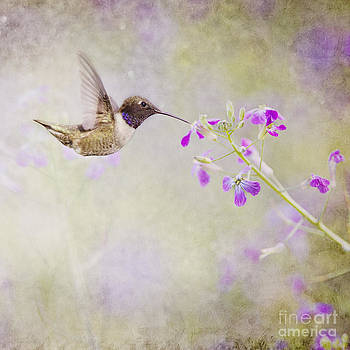 Susan Gary - Hummingbird and Purple Flowers