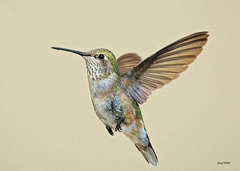 Hummingbird Approaching a Feeder by Stephen  Johnson