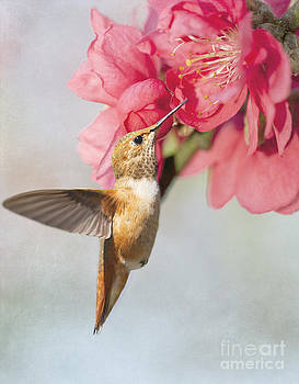 Susan Gary - Hummingbird at Cherry Blossom