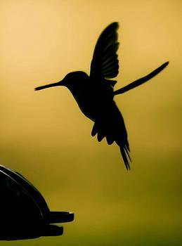 Hummingbird at Sunset by Soccer Dog Design