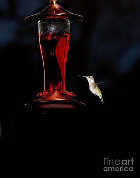 Hummingbird by David Kittrell