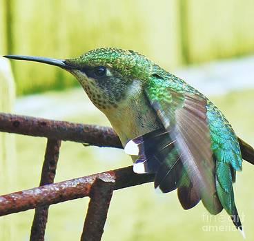 Hummingbird Details 6 by Judy Via-Wolff