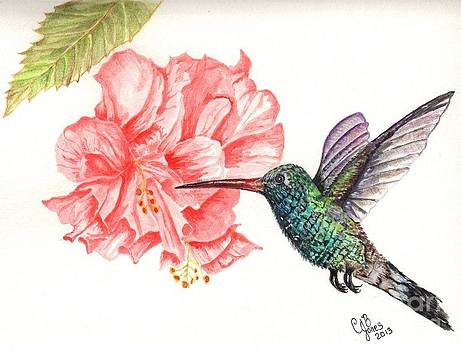 Hummingbird Dining by Chris Bajon Jones