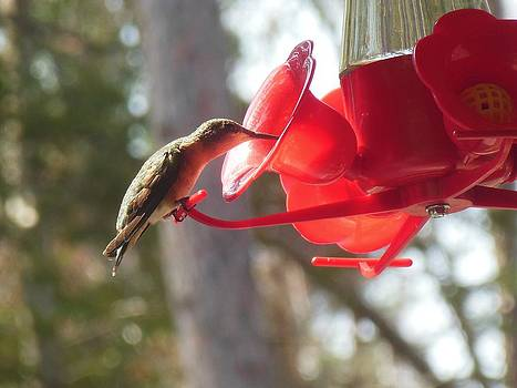 Hummingbird  Dining by Fawn Whelahan