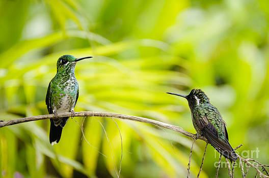 Oscar Gutierrez - Hummingbird Encounter