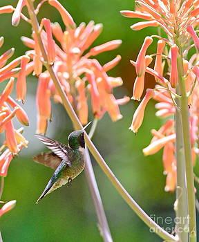 Wayne Nielsen - Hummingbird Green Floats at Aloe Orange