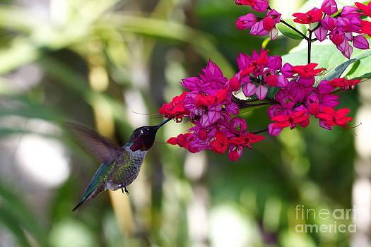 Hummingbird II by Pamela Gail Torres