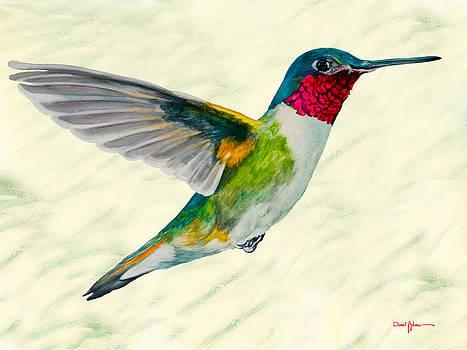 DA103 Broadtail Hummingbird Daniel Adams by Daniel Adams