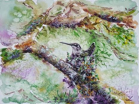 Zaira Dzhaubaeva - Hummingbird in the Nest