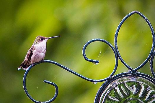 Hummingbird in the rain by Mike Lanzetta