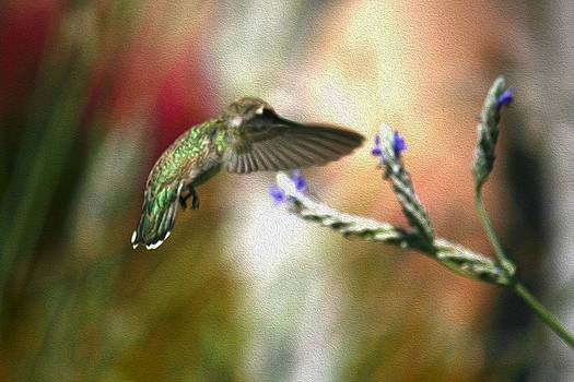 Veronica Vandenburg - Hummingbird