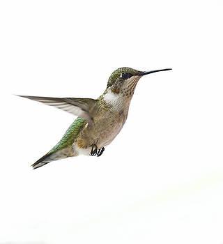Hummingbird by Marty Maynard