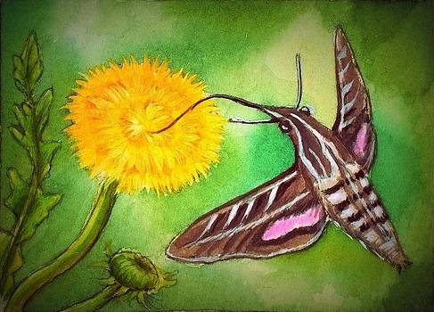 Hummingbird Moth at Dandelion by Debrah Nelson