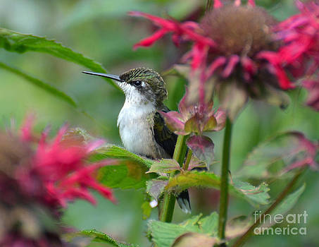 Hummingbird on a Leaf by Rodney Campbell