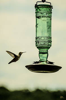 Hummingbird by Pat Scanlon