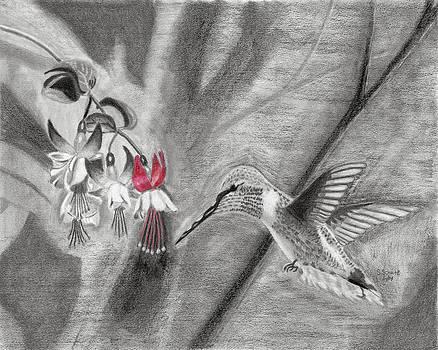 Hummingbird by Susan Schmitz