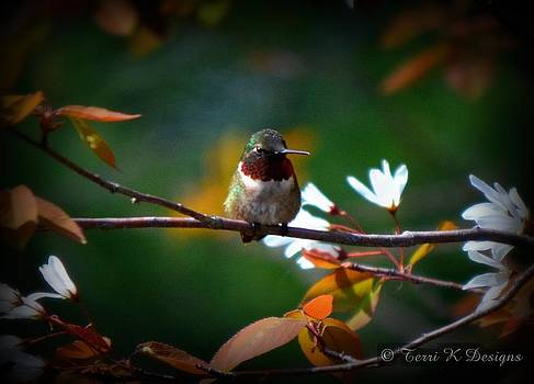 Hummingbird by Terri K Designs
