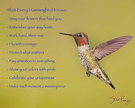 Hummingbird Wisdom by Steve Kaye