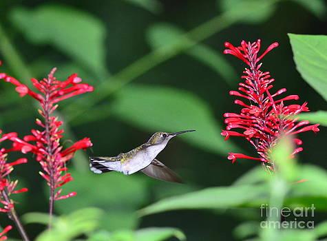 Wayne Nielsen - Hummingbird with Flower Red Suspension