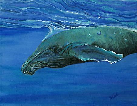 Humpback Calf by Bev Veals