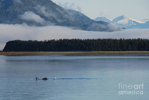 Humpback whales and Alaskan scenery by Camilla Brattemark