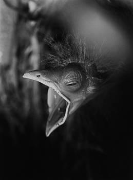 Hungry bird by Erik Tanghe