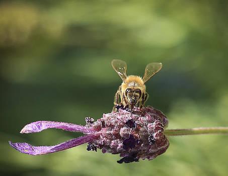 Hungry Bumble Bee by Dora Korzuchowska