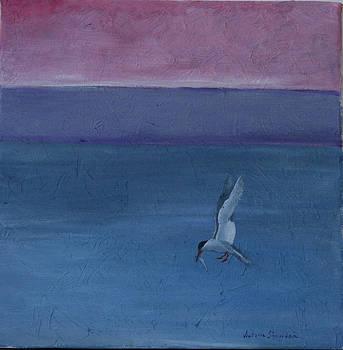 Hungry grey tern by Victoria Sheridan